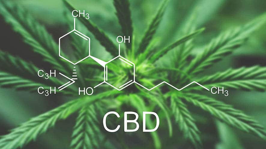 CBD Blog Article Gift Of Life CBD